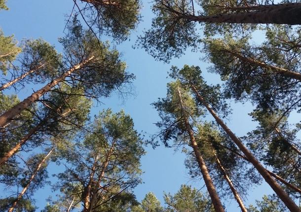 В Приморье лесные участки начали сдаваться в аренду на 50 лет